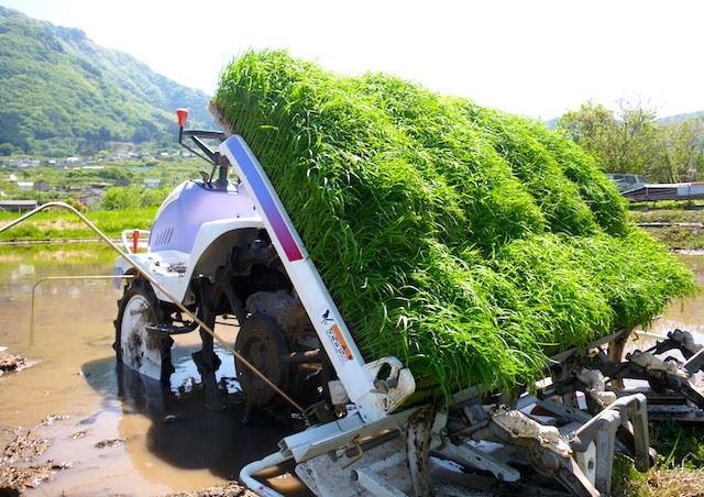 ヒノヒカリの取り寄せなら岡山の【下山さんちのお米】へ